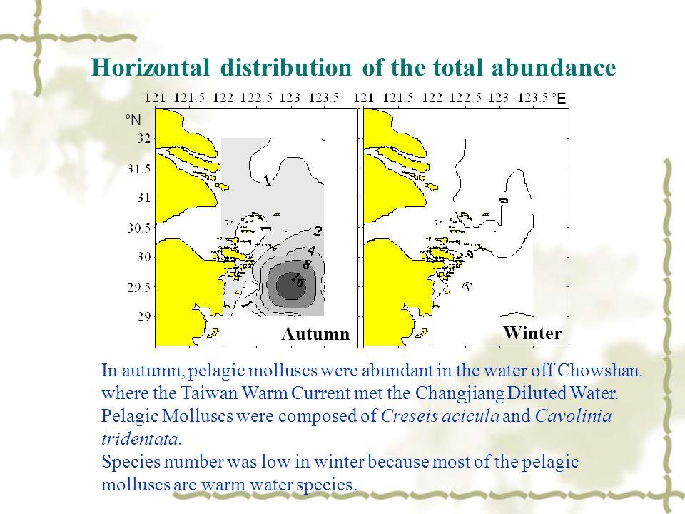 Autumn Winter °N °E In autumn, pelagic molluscs were abundant in the water off Chowshan.