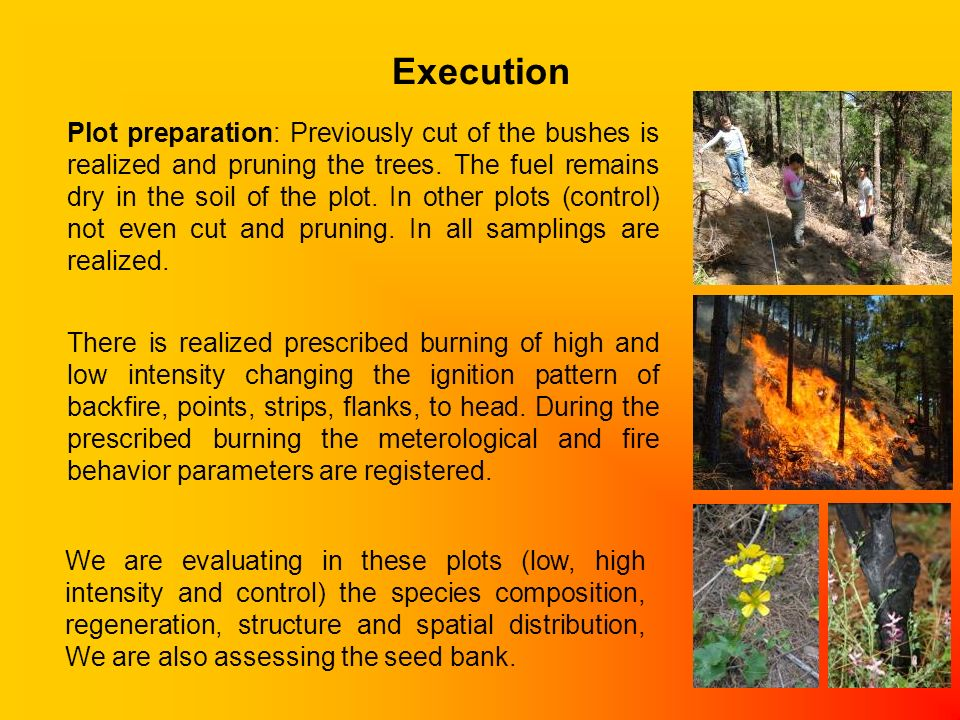 Execution Plot preparation: Previously cut of the bushes is realized and pruning the trees.