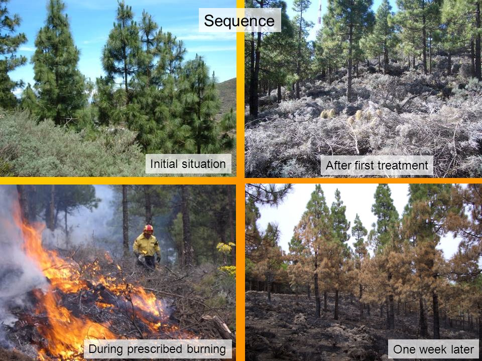 The same points after 24 months Sequence Initial situation After first treatment During prescribed burning One week later