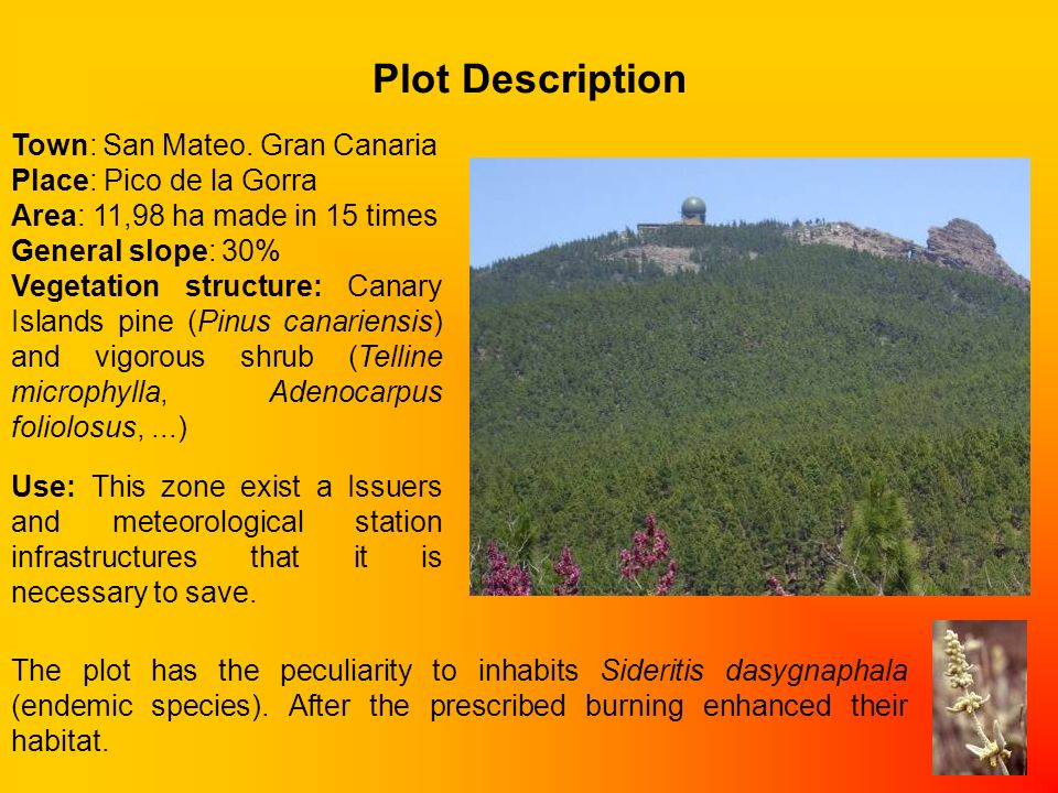 A well-planned prescribed burn demonstration area can help educate citizens about the advantages and disadvantages of prescribed burning.