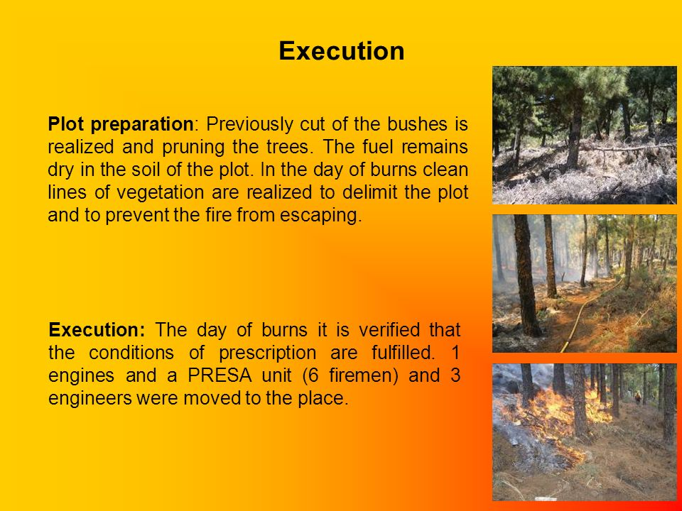Execution Plot preparation: Previously cut of the bushes is realized and pruning the trees. The fuel remains dry in the soil of the plot. In the day o