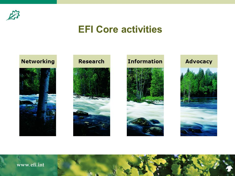 4 Research Programmes co-ordinated at Headquarters: Forest Ecology and Management Forest Product Markets and Socio-Economics Policy Analysis Forest Resources and Information Research at EFI Regional Offices and Project Centres