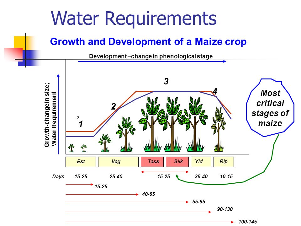 Growth-change in size; Water Requirement Growth and Development of a Maize crop 2 15-2525-4015-2535-4010-15 EstVegTassSilkYldRip Days 15-25 40-65 55-85 100-145 90-130 1 2 3 4 Development –change in phenological stage Most critical stages of maize Water Requirements