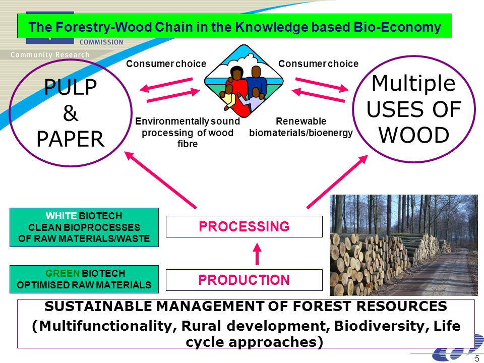 5 WHITE BIOTECH CLEAN BIOPROCESSES OF RAW MATERIALS/WASTE The Forestry-Wood Chain in the Knowledge based Bio-Economy SUSTAINABLE MANAGEMENT OF FOREST