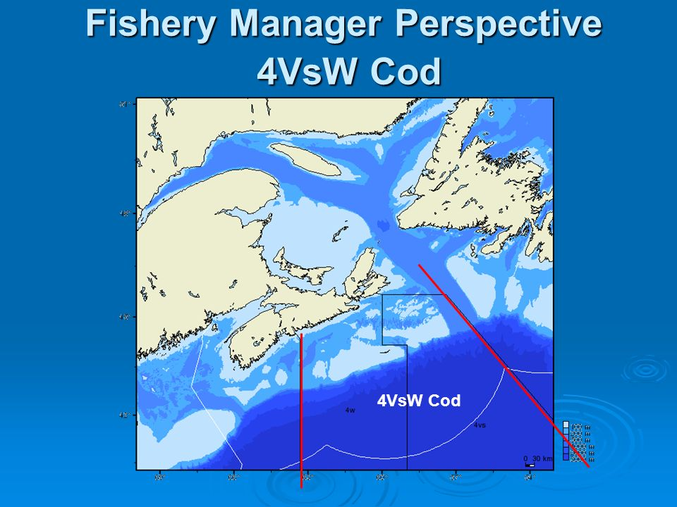Fishery Manager Perspective 4VsW Cod 4VsW Cod