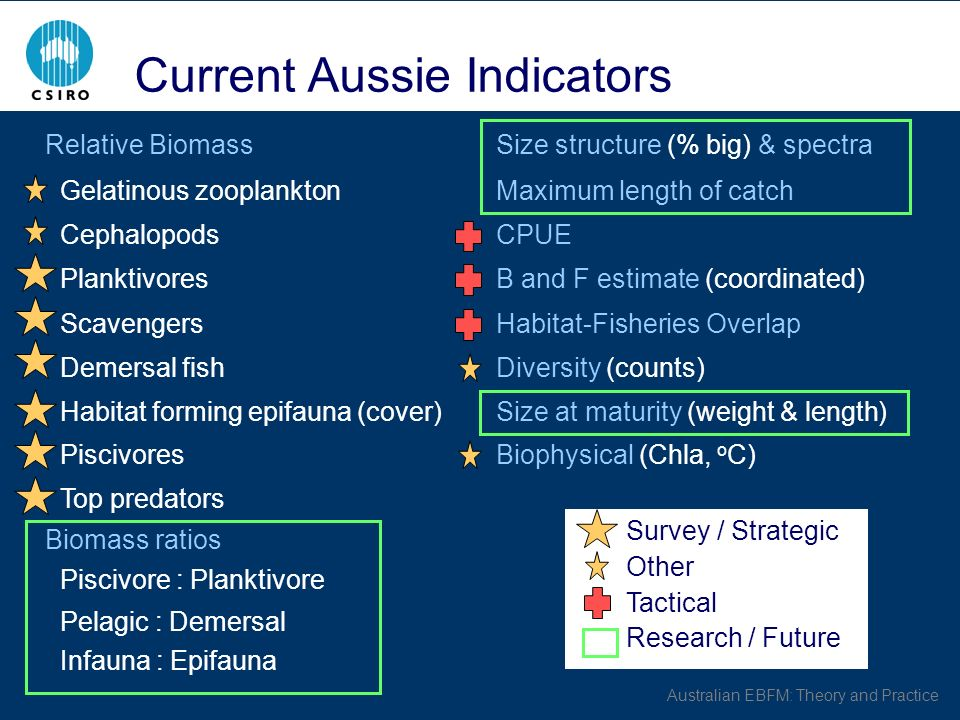 Australian EBFM: Theory and Practice Relative BiomassSize structure (% big) & spectra Gelatinous zooplanktonMaximum length of catch CephalopodsCPUE Pl