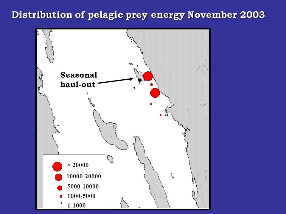 Seasonal haul-out > 20000 10000-20000 5000-10000 1000-5000 Distribution of pelagic prey energy November 2003 1-1000