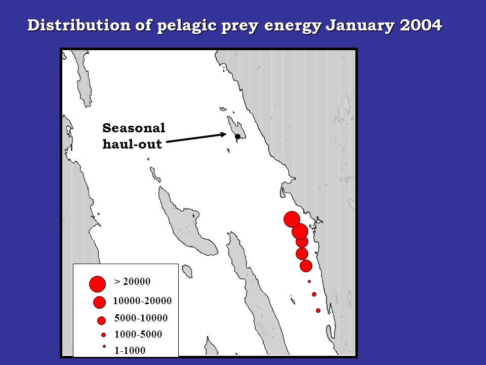 Seasonal haul-out > 20000 10000-20000 5000-10000 1000-5000 Distribution of pelagic prey energy January 2004 1-1000