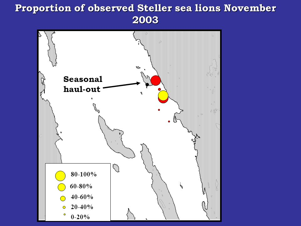 Seasonal haul-out 80-100% 60-80% 40-60% 20-40% Proportion of observed Steller sea lions November 2003 0-20%