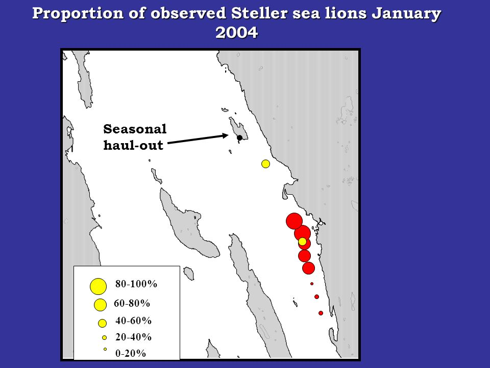Seasonal haul-out 80-100% 60-80% 40-60% 20-40% 0-20% Proportion of observed Steller sea lions January 2004