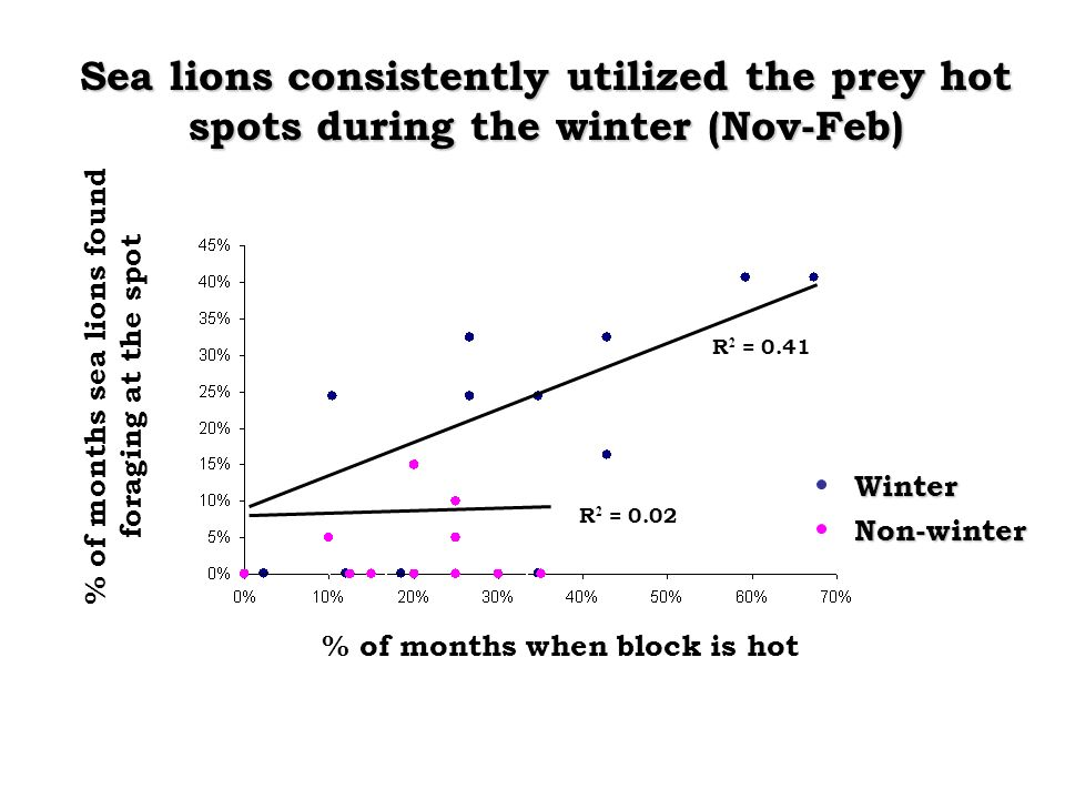 % of months when block is hot% of months sea lions found foraging at the spot R 2 = 0.02 R 2 = 0.41 Sea lions consistently utilized the prey hot spots during the winter (Nov-Feb) Non-winter Winter