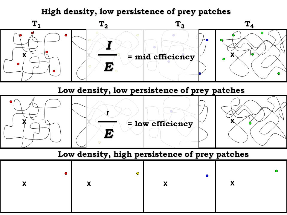 T1T1T1T1 T2T2T2T2 T3T3T3T3 T4T4T4T4 High density, low persistence of prey patches Low density, low persistence of prey patches x xxx x xxx = mid efficiency = low efficiency I E I E x xxx Low density, high persistence of prey patches