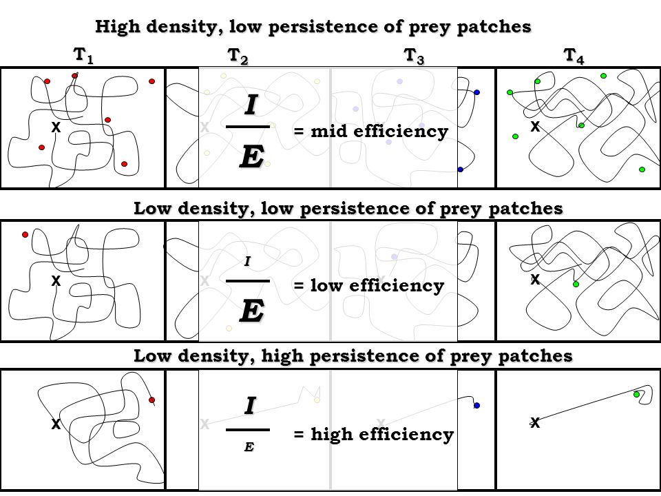 T1T1T1T1 T2T2T2T2 T3T3T3T3 T4T4T4T4 High density, low persistence of prey patches Low density, low persistence of prey patches x xxx x xxx = mid efficiency = low efficiency I E I E x xxx Low density, high persistence of prey patches = high efficiency I E