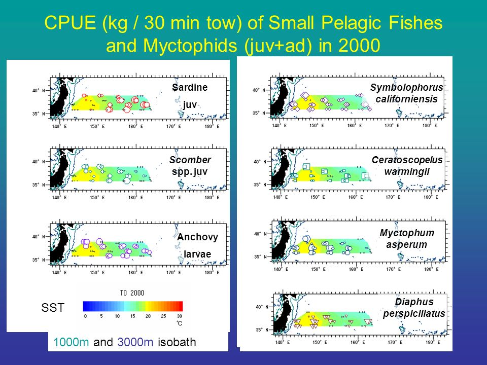 CPUE (kg / 30 min tow) of Small Pelagic Fishes and Myctophids (juv+ad) in 2000 Sardine juv Scomber spp.