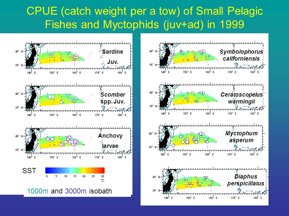 CPUE (catch weight per a tow) of Small Pelagic Fishes and Myctophids (juv+ad) in 1999 Sardine Juv.