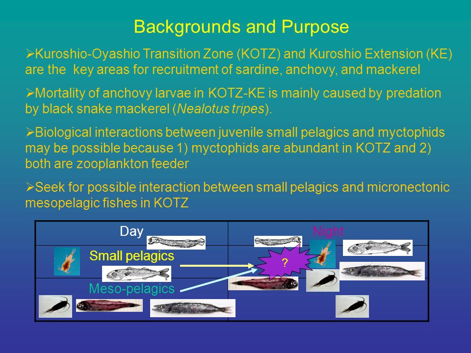 Backgrounds and Purpose Kuroshio-Oyashio Transition Zone (KOTZ) and Kuroshio Extension (KE) are the key areas for recruitment of sardine, anchovy, and mackerel Mortality of anchovy larvae in KOTZ-KE is mainly caused by predation by black snake mackerel (Nealotus tripes).