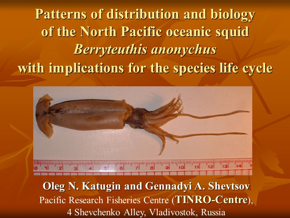 Patterns of distribution and biology of the North Pacific oceanic squid Berryteuthis anonychus with implications for the species life cycle Oleg N.