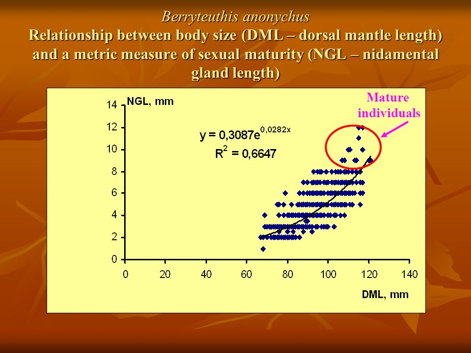 Berryteuthis anonychus Relationship between body size (DML – dorsal mantle length) and a metric measure of sexual maturity (NGL – nidamental gland length) Mature individuals