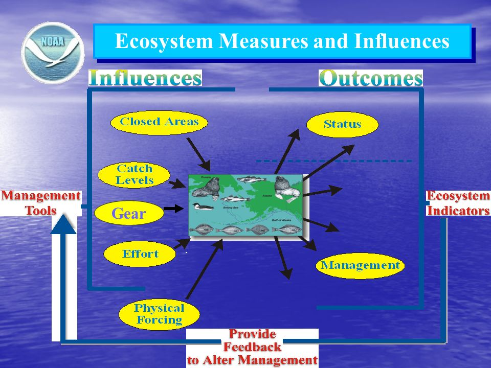 Ecosystem Measures and Influences Gear
