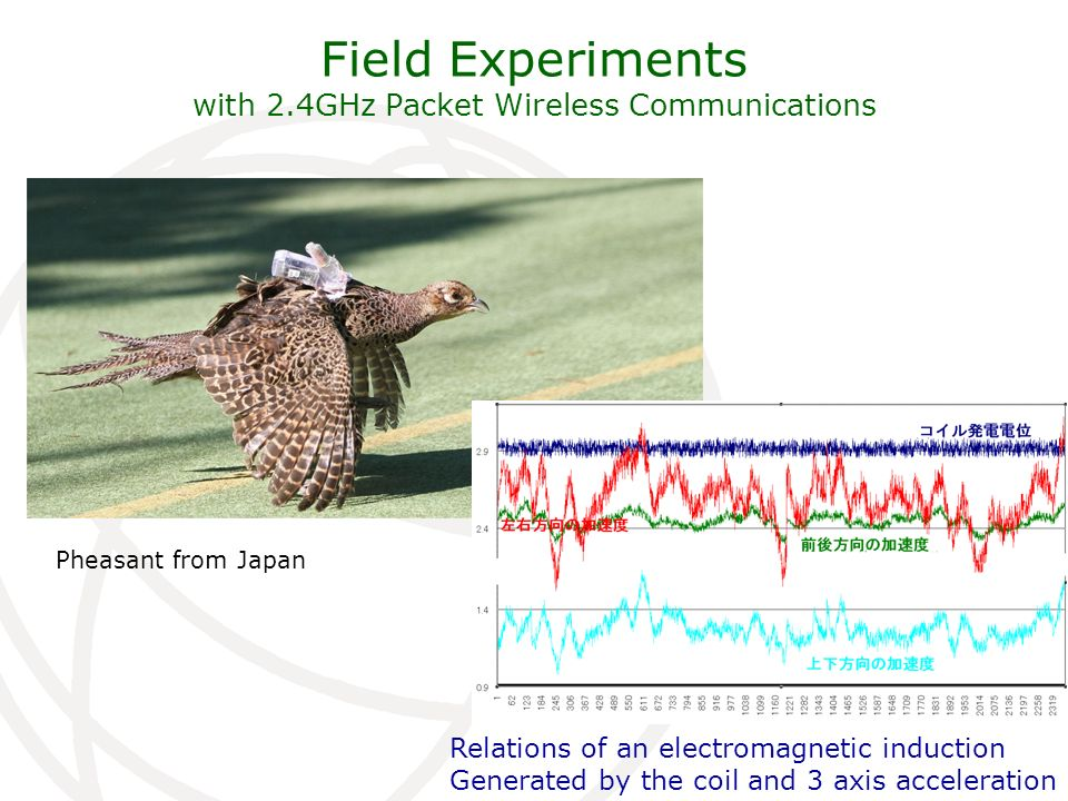 Field Experiments with 2.4GHz Packet Wireless Communications Pheasant from Japan Relations of an electromagnetic induction Generated by the coil and 3