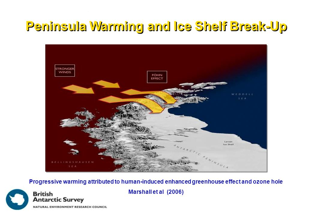 Peninsula Warming and Ice Shelf Break-Up Progressive warming attributed to human-induced enhanced greenhouse effect and ozone hole Marshall et al (2006)