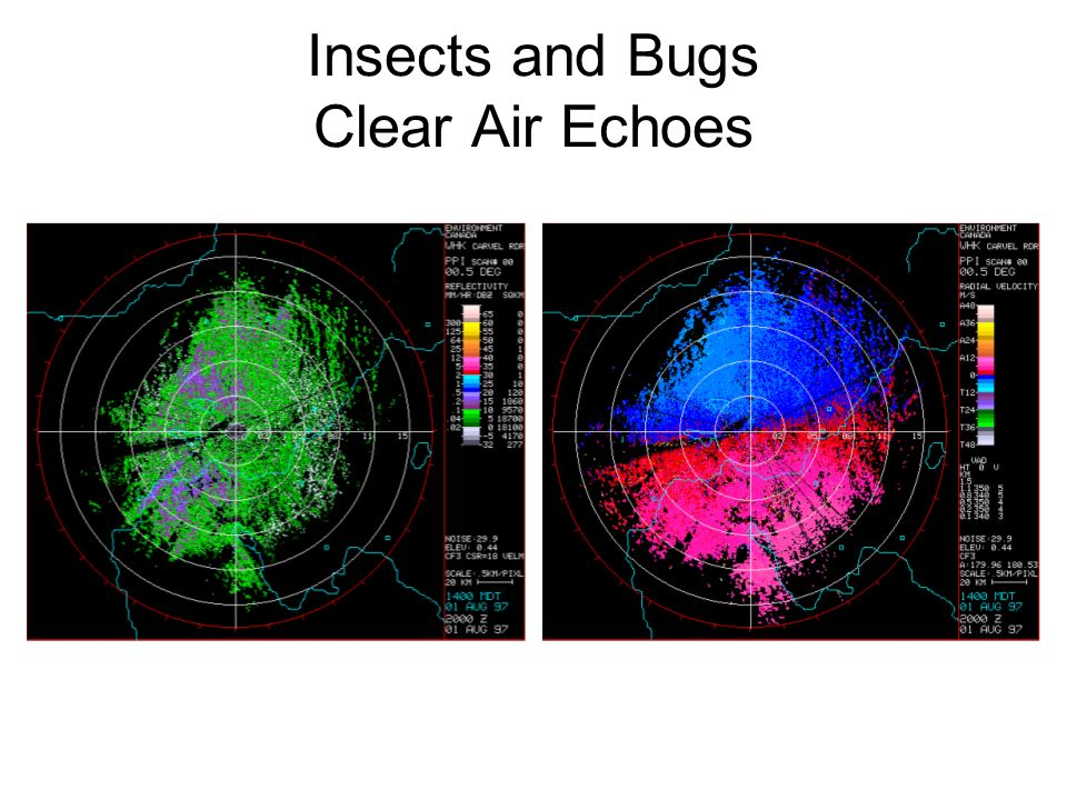 Insects and Bugs Clear Air Echoes