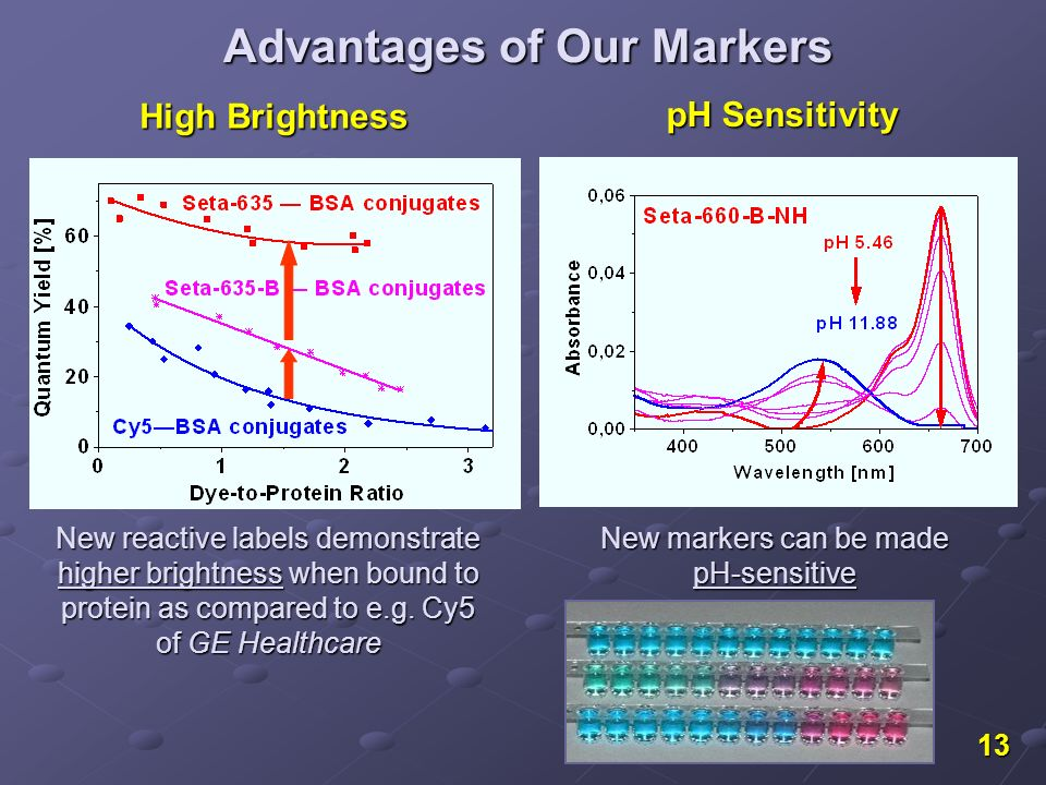 13 New reactive labels demonstrate higher brightness when bound to protein as compared to e.g. Cy5 of GE Healthcare New markers can be made pH-sensiti