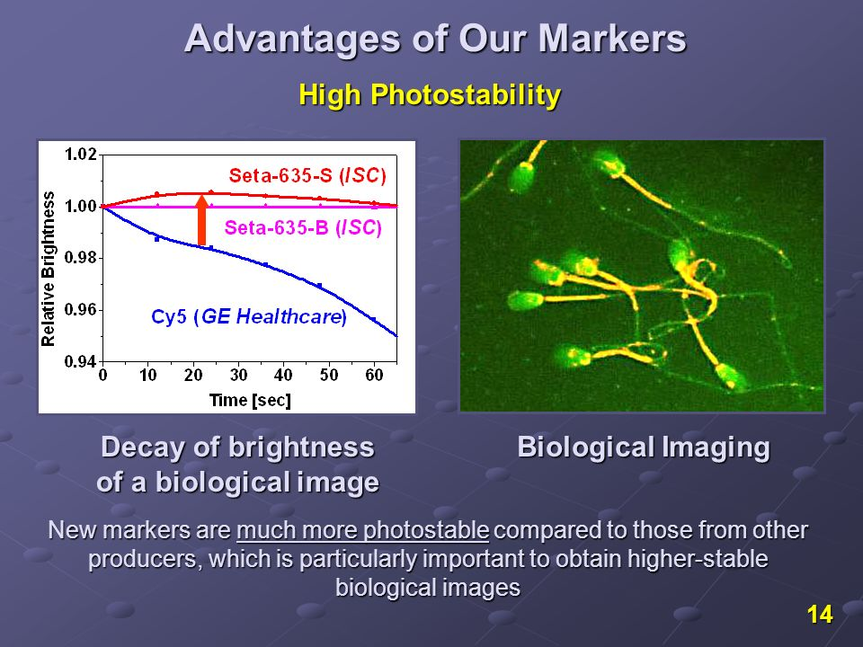 14 Decay of brightness of a biological image High Photostability Biological Imaging Advantages of Our Markers New markers are much more photostable compared to those from other producers, which is particularly important to obtain higher-stable biological images