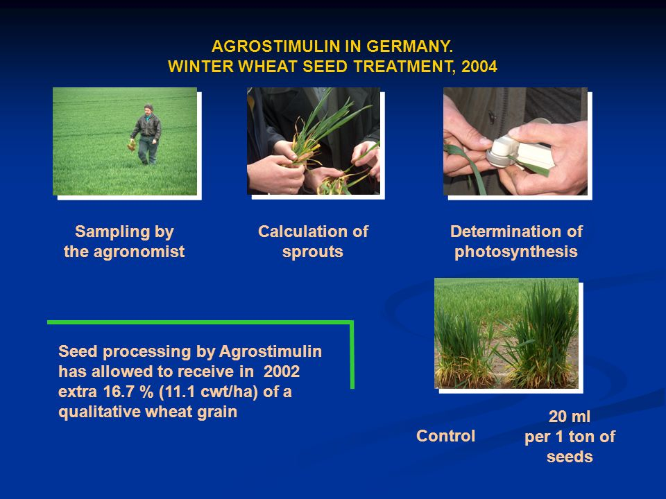 Sampling by the agronomist Calculation of sprouts Determination of photosynthesis Control 20 ml per 1 ton of seeds Seed processing by Agrostimulin has allowed to receive in 2002 extra 16.7 % (11.1 cwt/ha) of a qualitative wheat grain AGROSTIMULIN IN GERMANY.
