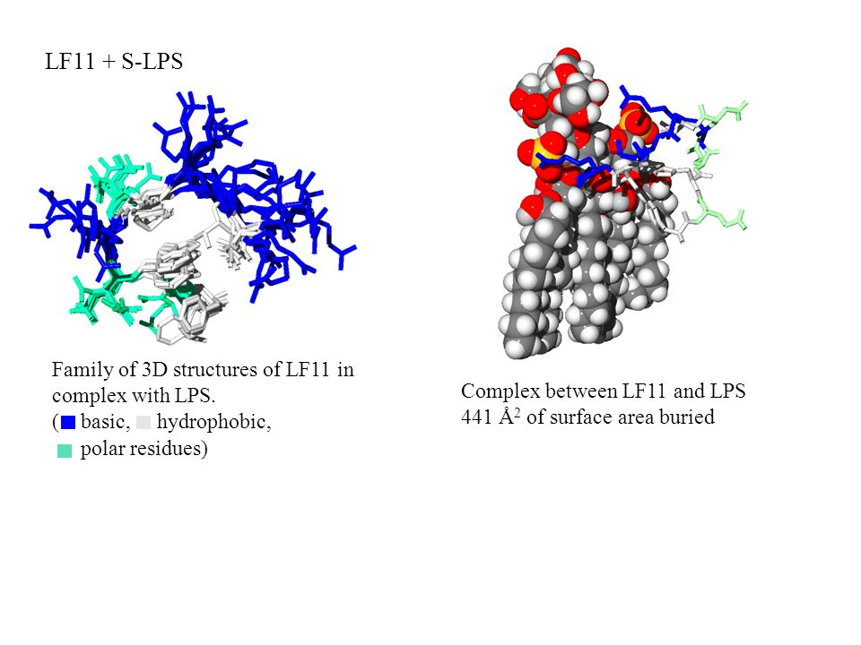 Family of 3D structures of LF11 in complex with LPS. ( basic, hydrophobic, LF11 + S-LPS Complex between LF11 and LPS 441 Å 2 of surface area buried po