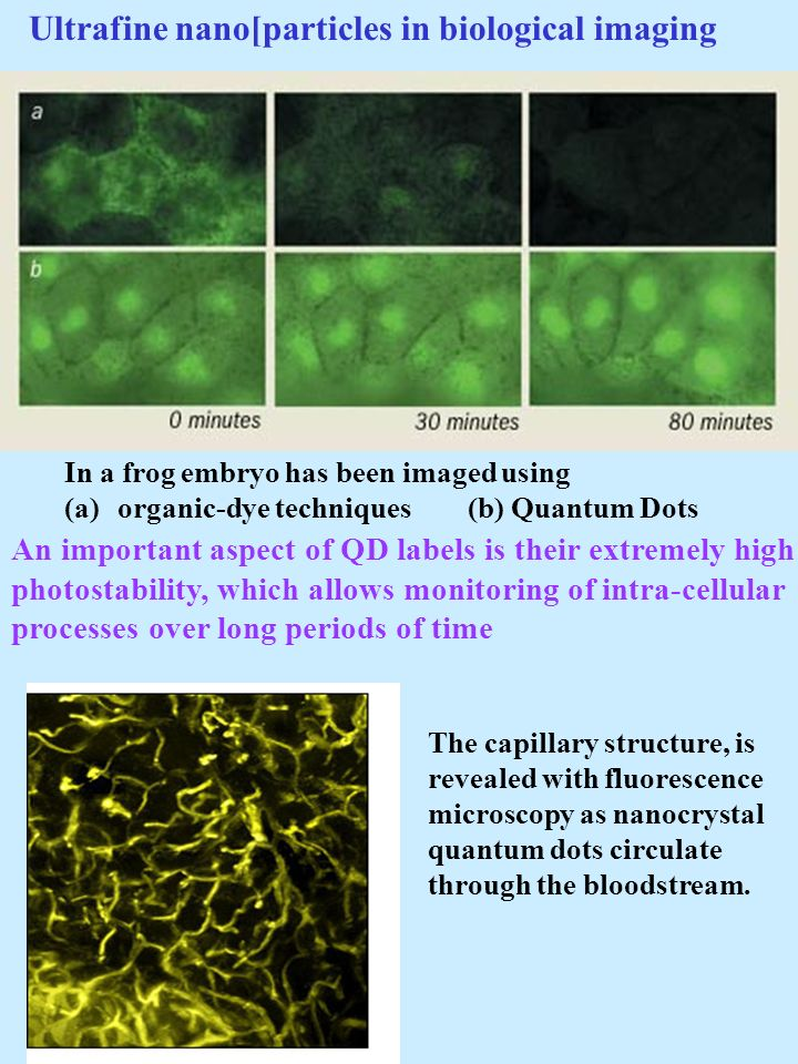 In a frog embryo has been imaged using (a)organic-dye techniques (b) Quantum Dots The capillary structure, is revealed with fluorescence microscopy as nanocrystal quantum dots circulate through the bloodstream.