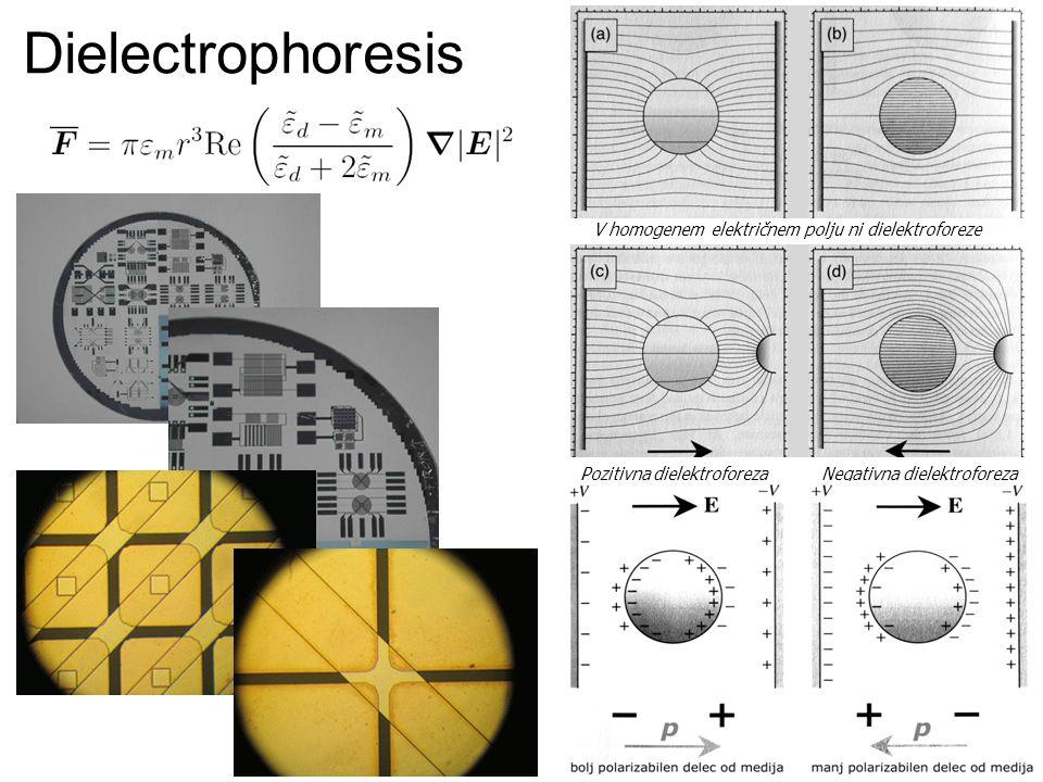 Dielectrophoresis Pozitivna dielektroforeza Negativna dielektroforeza V homogenem električnem polju ni dielektroforeze