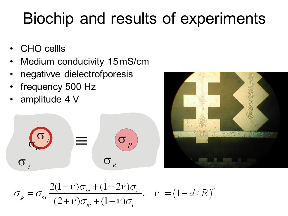 Biochip and results of experiments CHO cellls Medium conducivity 15 mS/cm negativve dielectrofporesis frequency 500 Hz amplitude 4 V