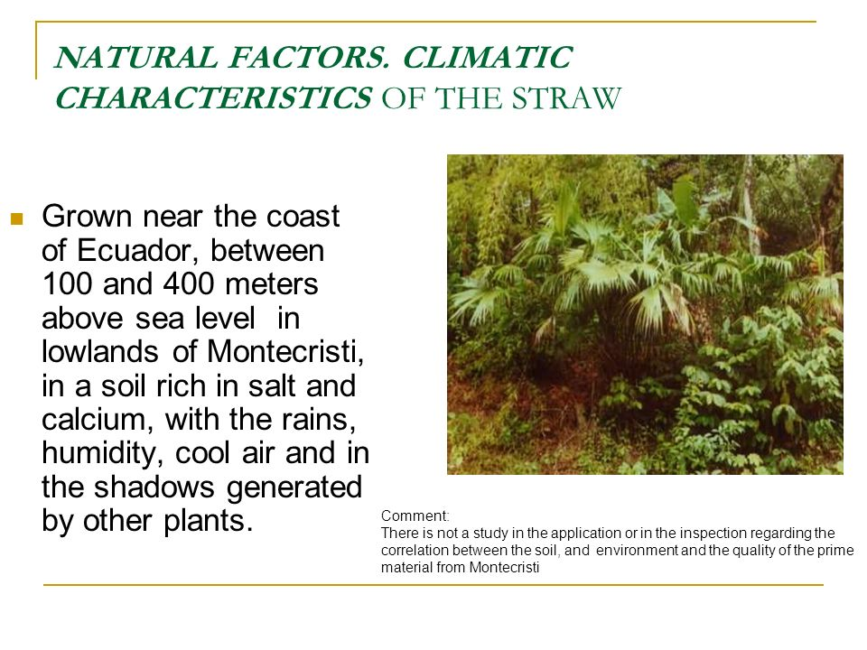NATURAL FACTORS. CLIMATIC CHARACTERISTICS OF THE STRAW Grown near the coast of Ecuador, between 100 and 400 meters above sea level in lowlands of Mont