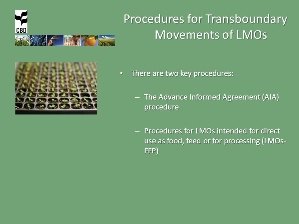 Procedures for Transboundary Movements of LMOs There are two key procedures: There are two key procedures: – The Advance Informed Agreement (AIA) procedure – Procedures for LMOs intended for direct use as food, feed or for processing (LMOs- FFP)