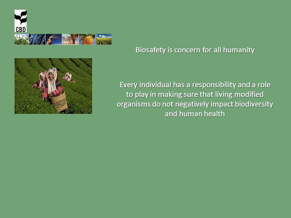 Biosafety is concern for all humanity Every individual has a responsibility and a role to play in making sure that living modified organisms do not negatively impact biodiversity and human health