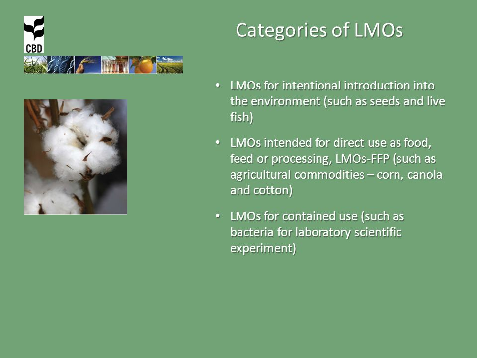 Categories of LMOs LMOs for intentional introduction into the environment (such as seeds and live fish) LMOs for intentional introduction into the environment (such as seeds and live fish) LMOs intended for direct use as food, feed or processing, LMOs-FFP (such as agricultural commodities – corn, canola and cotton) LMOs intended for direct use as food, feed or processing, LMOs-FFP (such as agricultural commodities – corn, canola and cotton) LMOs for contained use (such as bacteria for laboratory scientific experiment) LMOs for contained use (such as bacteria for laboratory scientific experiment)