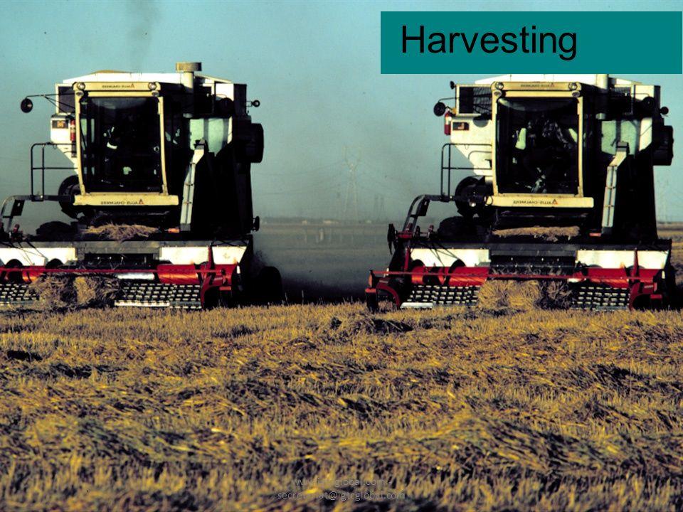16 Harvesting www.igtcglobal.com - secretariat@igtcglobal.com