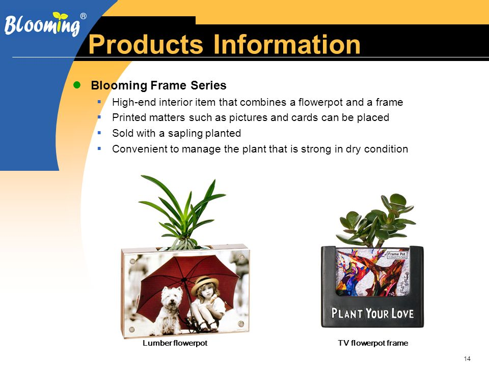 14 Products Information Blooming Frame Series High-end interior item that combines a flowerpot and a frame Printed matters such as pictures and cards can be placed Sold with a sapling planted Convenient to manage the plant that is strong in dry condition Lumber flowerpotTV flowerpot frame