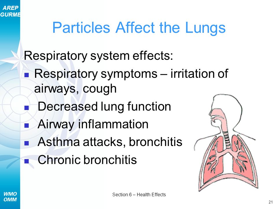 AREP GURME 21 Section 6 – Health Effects Particles Affect the Lungs Respiratory system effects: Respiratory symptoms – irritation of airways, cough De