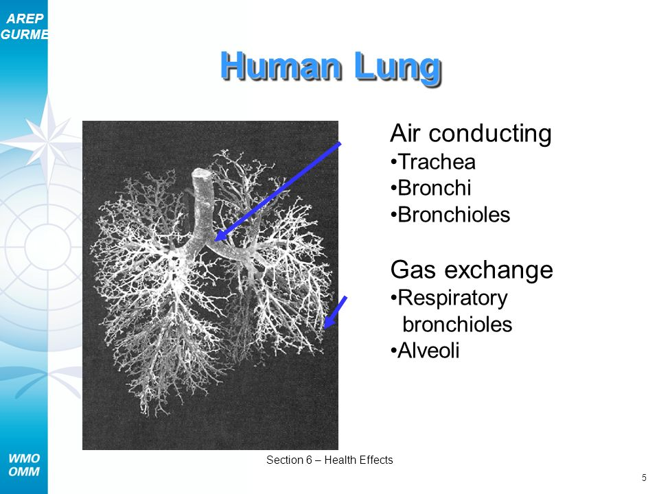 AREP GURME 36 Section 6 – Health Effects Will It Matter if Air Pollution Decreases.