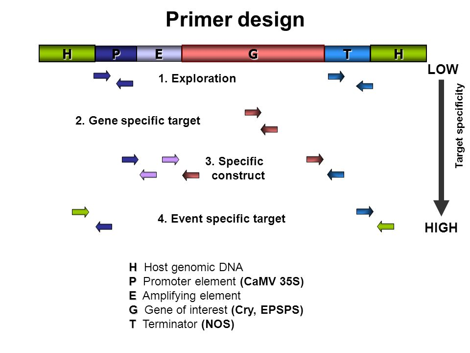 Factors to consider Specificity – primer design Product length (DNA amplified fragment) There are differences between qualitative and quantitative tes