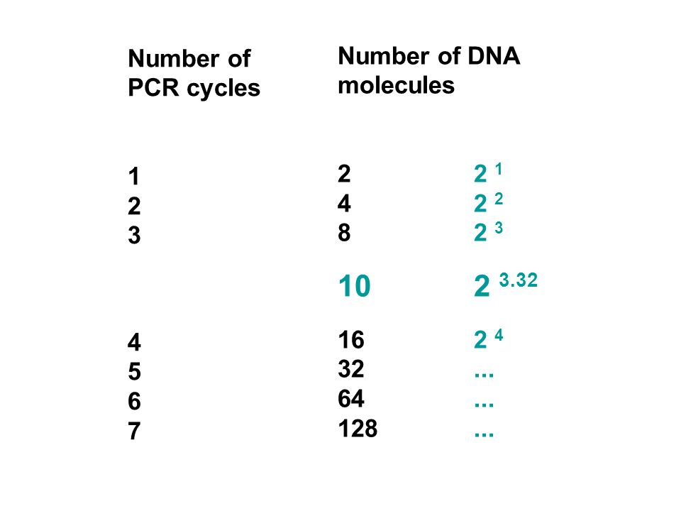 10210.11000.01 Cycle number PCR products Ct Log conc. m=-3.32 Ct = number of cycles needed for the amplification signal to be statistically different