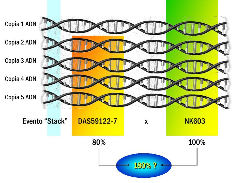 Evento Stack DAS59122-7 x NK603 Copia 1 ADN Copia 2 ADN Copia 3 ADN Copia 4 ADN Copia 5 ADN 100% 200% ?