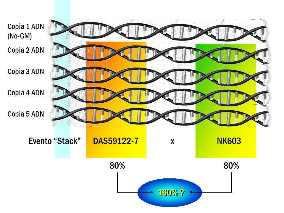Evento Stack DAS59122-7 x NK603 Copia 1 ADN Copia 2 ADN Copia 3 ADN Copia 4 ADN Copia 5 ADN 80%100% 180% ?