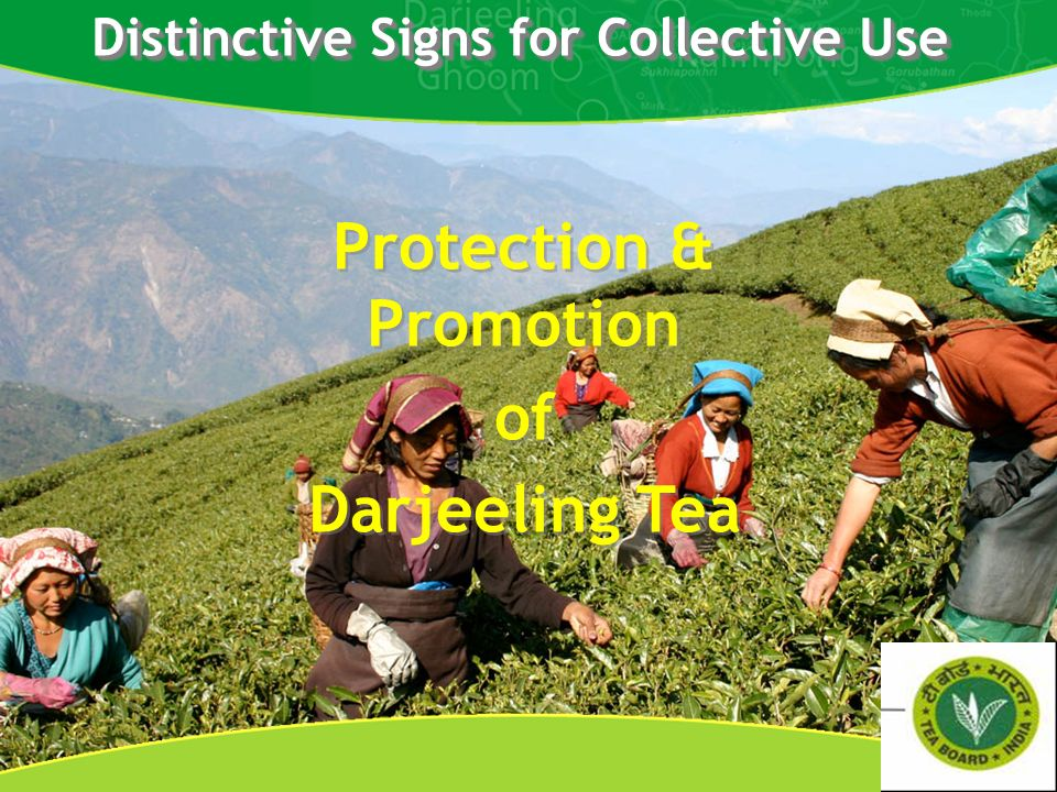 Distinctive Signs for Collective Use Protection & Promotion of Darjeeling Tea Protection & Promotion of Darjeeling Tea