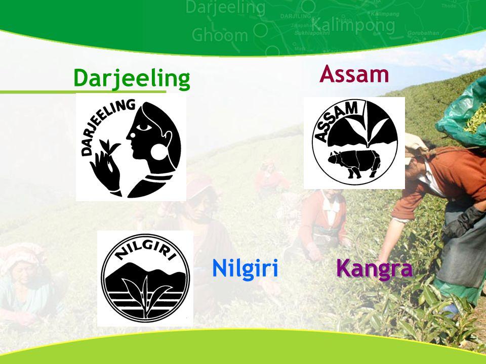 Darjeeling Assam Nilgiri Kangra