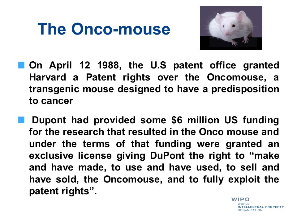 The Onco-mouse On April 12 1988, the U.S patent office granted Harvard a Patent rights over the Oncomouse, a transgenic mouse designed to have a predi