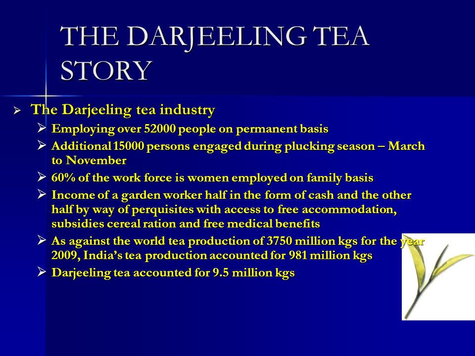 THE DARJEELING TEA STORY The Darjeeling tea industry The Darjeeling tea industry Employing over 52000 people on permanent basis Employing over 52000 people on permanent basis Additional 15000 persons engaged during plucking season – March to November Additional 15000 persons engaged during plucking season – March to November 60% of the work force is women employed on family basis 60% of the work force is women employed on family basis Income of a garden worker half in the form of cash and the other half by way of perquisites with access to free accommodation, subsidies cereal ration and free medical benefits Income of a garden worker half in the form of cash and the other half by way of perquisites with access to free accommodation, subsidies cereal ration and free medical benefits As against the world tea production of 3750 million kgs for the year 2009, Indias tea production accounted for 981 million kgs As against the world tea production of 3750 million kgs for the year 2009, Indias tea production accounted for 981 million kgs Darjeeling tea accounted for 9.5 million kgs Darjeeling tea accounted for 9.5 million kgs