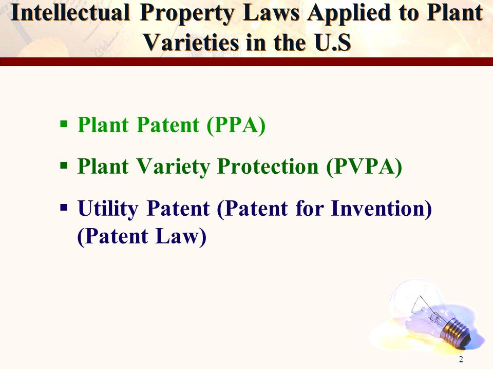 2 Intellectual Property Laws Applied to Plant Varieties in the U.S Plant Patent (PPA) Plant Variety Protection (PVPA) Utility Patent (Patent for Inven